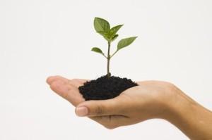 hand-holding-seedling