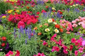 colorful-flower-garden