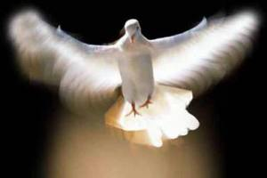 holy-spirit-dove1